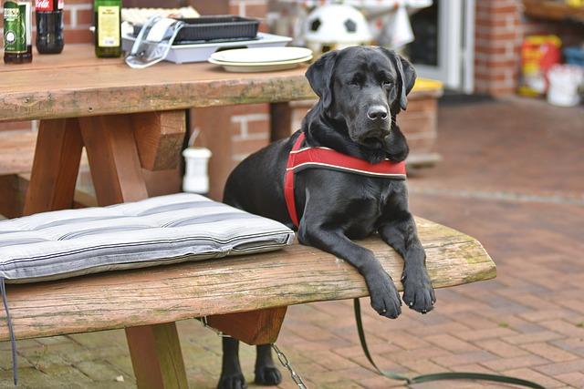 Kolik stojí výcvik, trénink psa