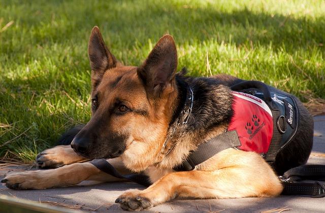 kolik stojí trénink psa