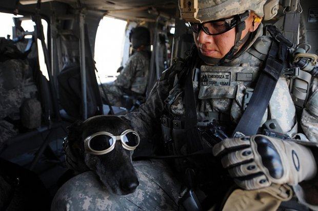 Co vše potřebuje pes v letadle