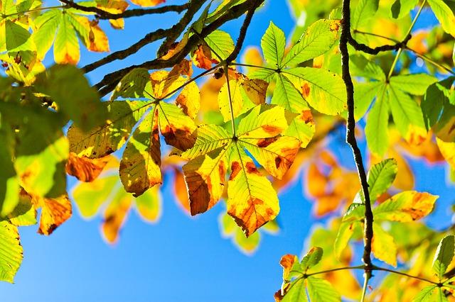 Podzimní volné dny a prodloužené víkendy