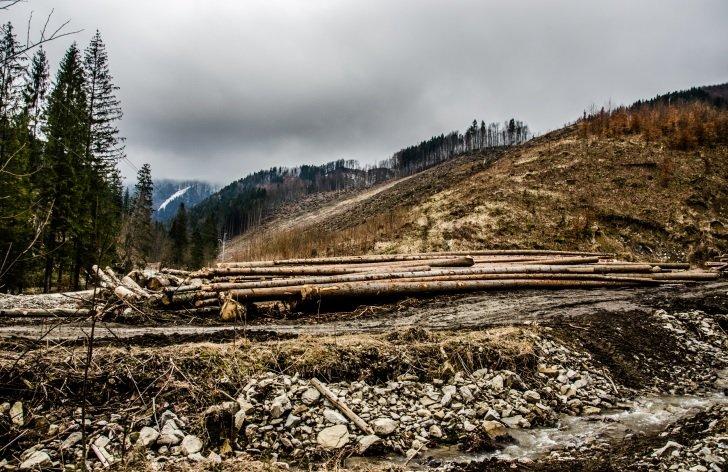 Ničenie lesa s požehnaním zákonov