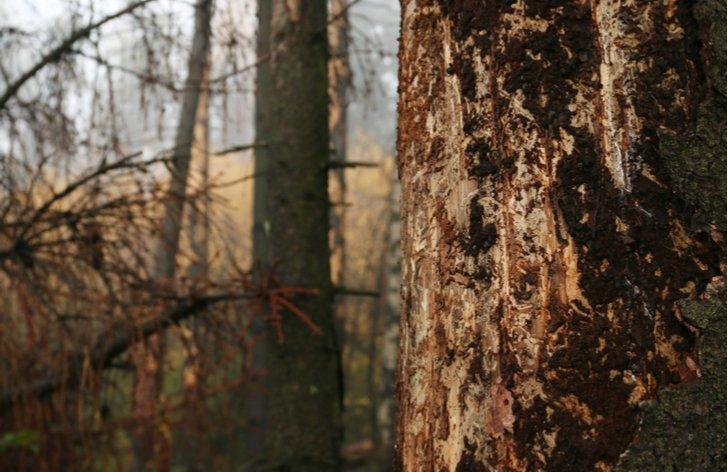 Jak budou vypadat lesy po kůrovcové kalamitě?