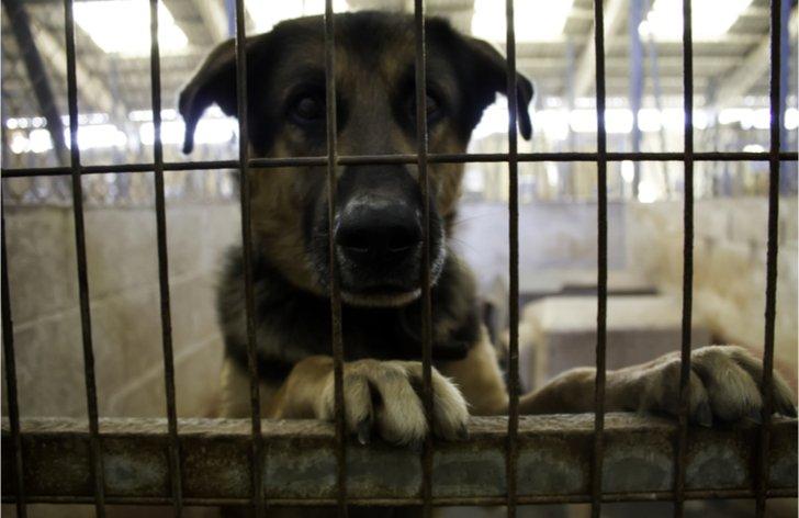 Povinné čipovanie psov 2018: termíny, cena, pokuta, zákon