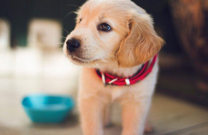 Ako prepravovať psa lietadlom: podmienky a na čo si dať pozor
