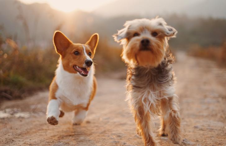 koľko stojí pes na slovensku?