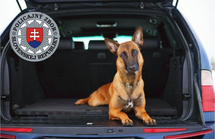 Ako správne prevážať psa alebo iné zviera v aute