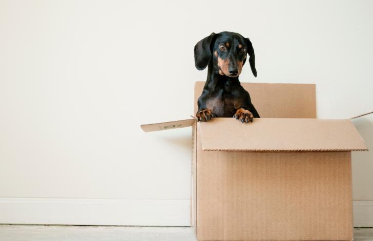 ako sa šikovne presťahovať