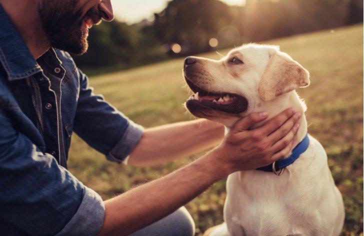 Co dělat, když najdete ztraceného psa?